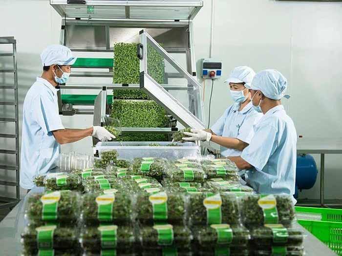 Tại sao nên đóng gói rau củ quả trước khi phân phối vào siêu thị